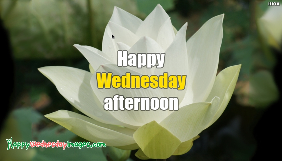 Happy Wednesday Images for Afternoon