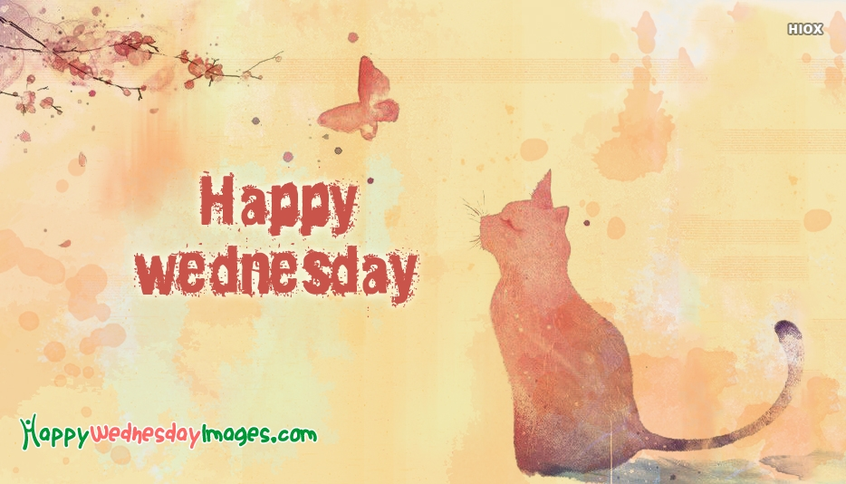 Happy Wednesday Cat