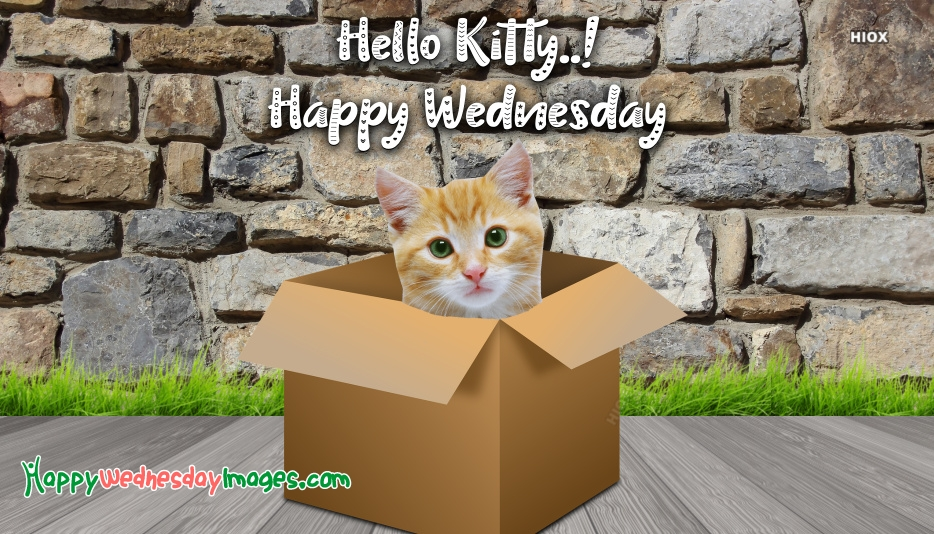 Happy Wednesday Cat Images