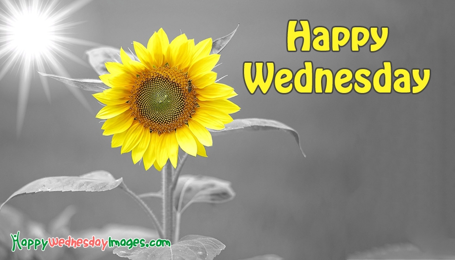 Happy Wednesday Images with Flowers