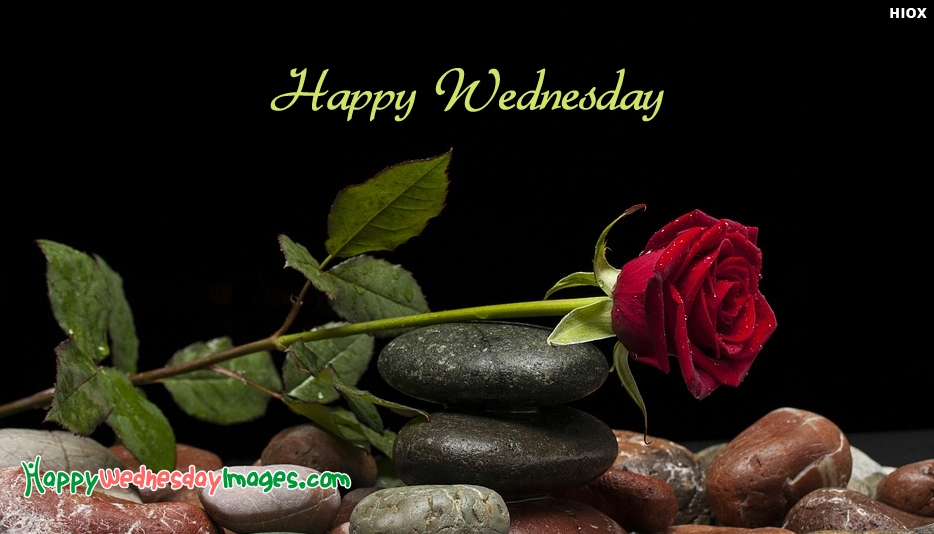 Happy Wednesday Roses - Happy Wednesday Images for Wallpaper