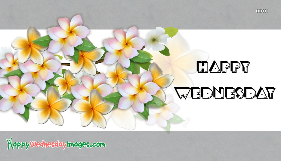 Happy Wednesday With Flowers