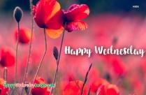 Happy Wednesday To You Too Image